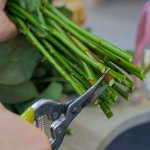 entretien fleurs coupées