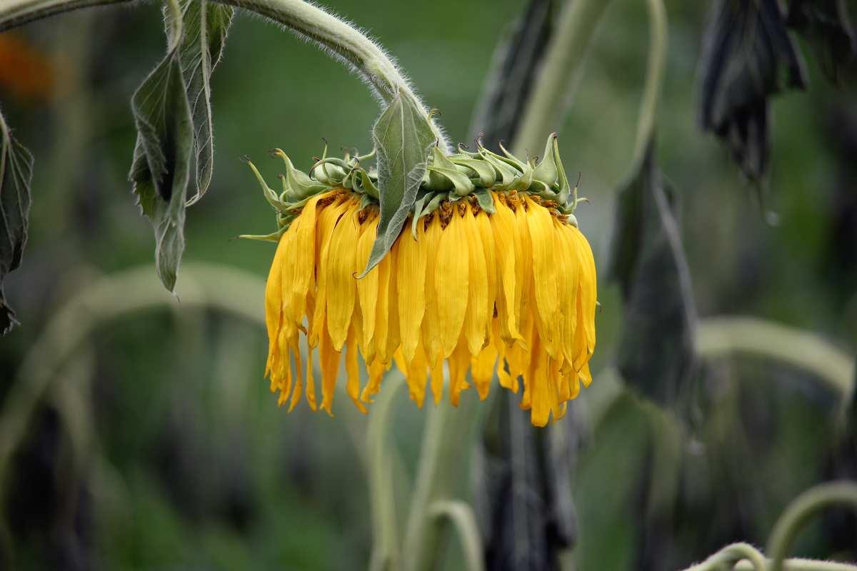 Garder ses fleurs fraiches plus longtemps
