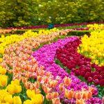 Signification de la couleurs des fleurs